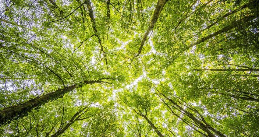 Arboristnorthshore