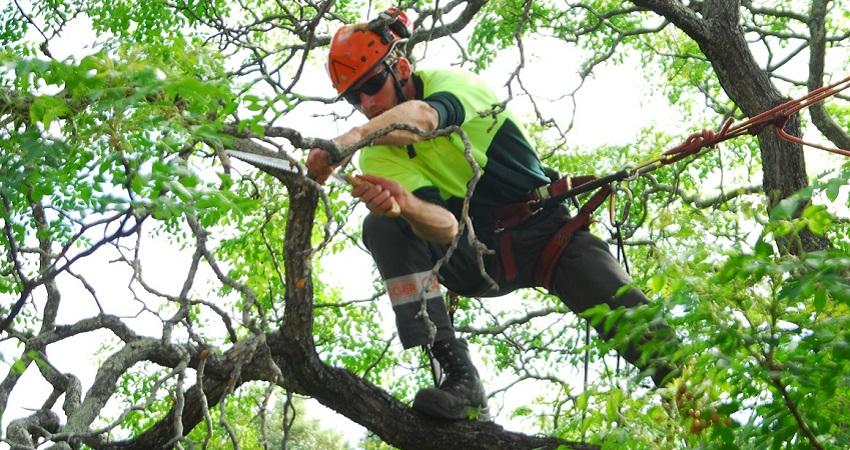 Treepruningauckland