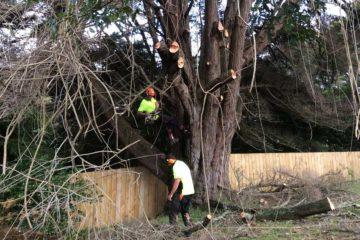 Tree Maintenance / Tree Care