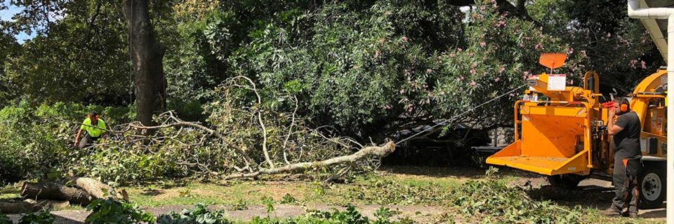 Tree Removal Auckland | Tree Removal North Shore Auckland | Tree Felling