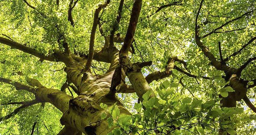 Arborists tree services north shore | arborist north shore | tree services north shore