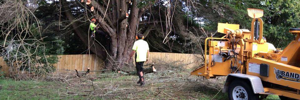 Arborist Auckland | Arborist North Shore