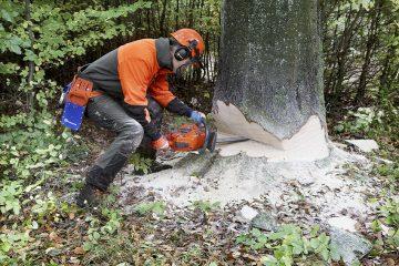Tree removal & tree felling
