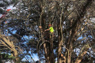 Tree trimming & tree pruning